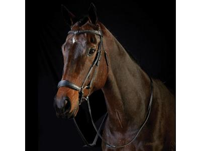 Collegiate Drop Noseband Bridle Black